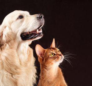 Companion Animals